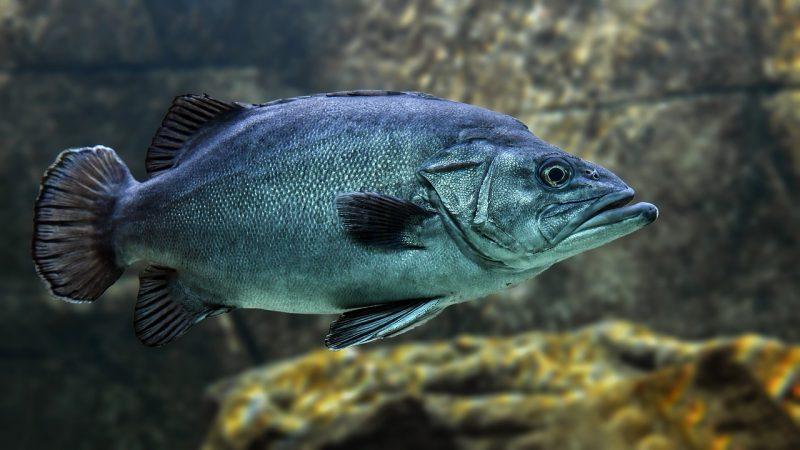 La scuola ai tempi del Covid, il pesce d'Aprile in ritardo